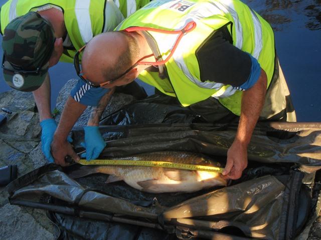 Poole Park fish management