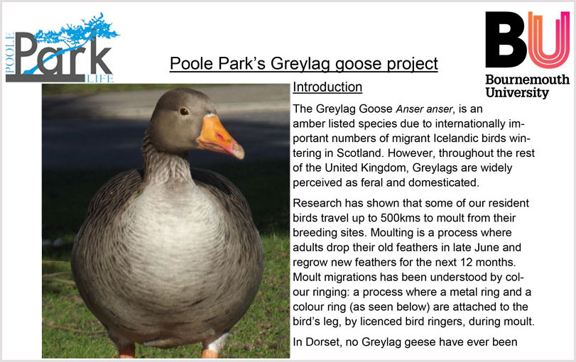 Greylag Goose Project
