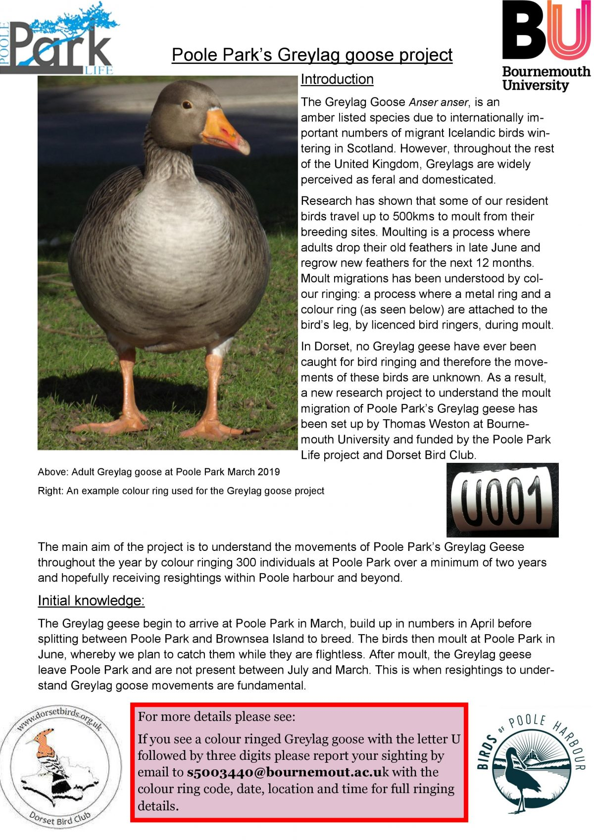 Poole Park's Greylag Goose project poster