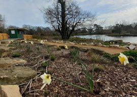 Poole Park Latest News