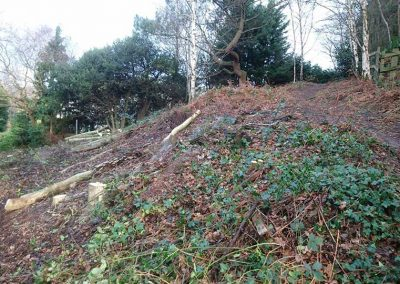 Tree works and holly clearance, January 2018
