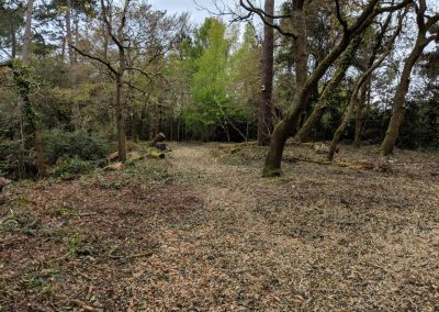 The final woodland work completed, April 2018